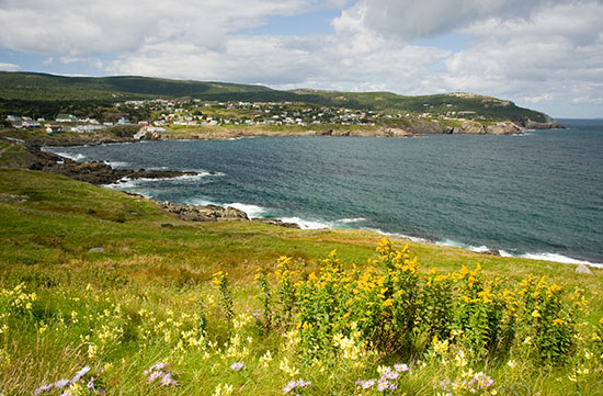 Pouch Cove with loads of wildlflowers even though it's mid-september.